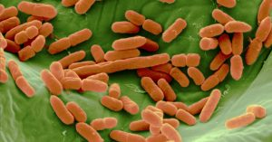 E. coli outbreak sickens 96 people across 5 states, CDC says
