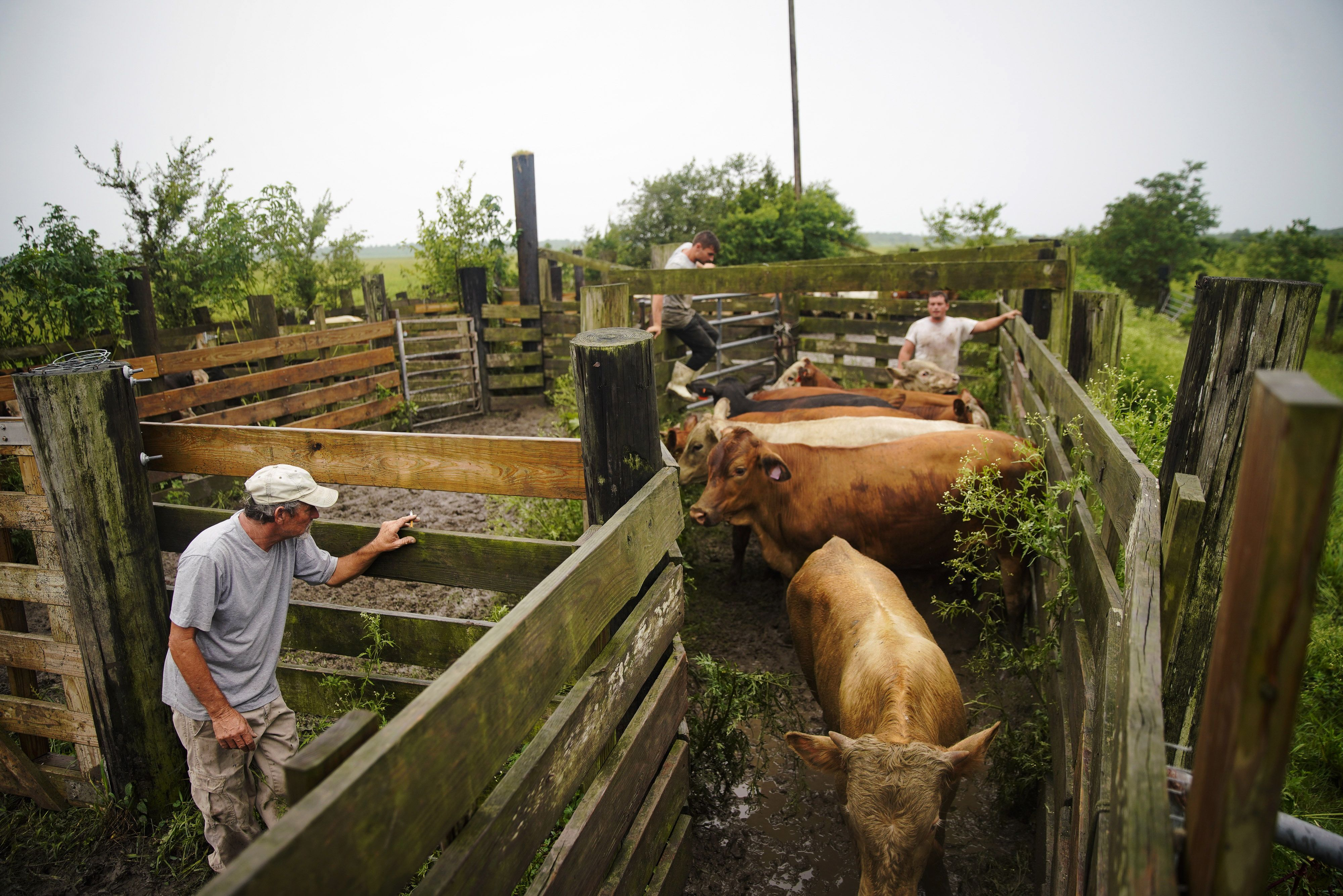 Extreme heat wave hits US farmers already suffering from flooding
