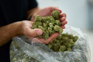 US Senate looks at easing cannabis laws that restrict access to banking services