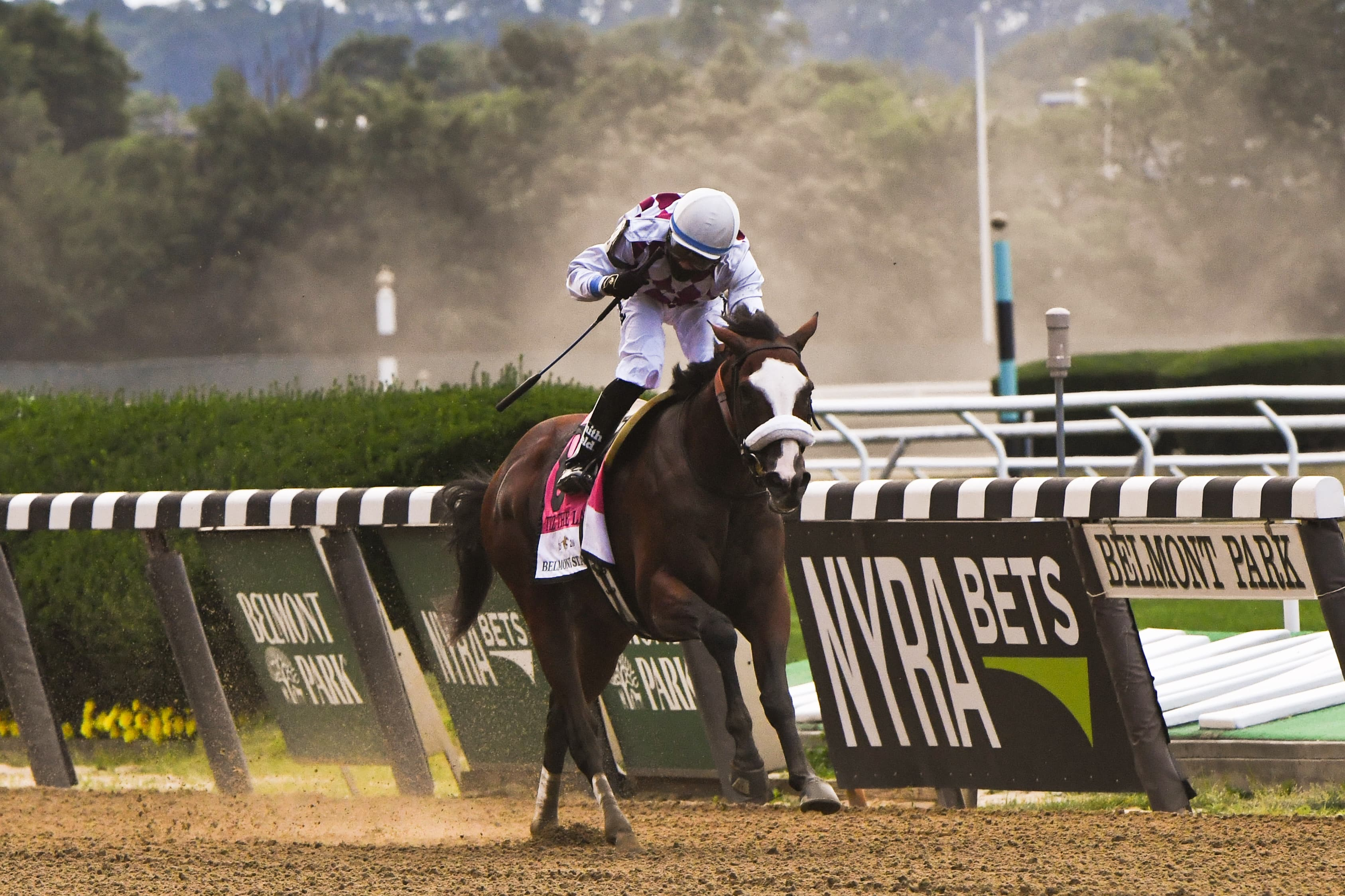 Owning a racehorse in the Belmont Stakes is more attainable as fractional ownership platforms grow